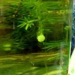 tabletki javel aqua uzdatnianie wody 6 150x150 - Filtr Sawyer Mini Sp-128 i tabletki Javel Aqua. Jak oczyścić wodę?